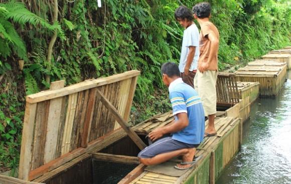 Peluang Usaha Di Kampung Yang Menguntungkan Pengusahasukses Com